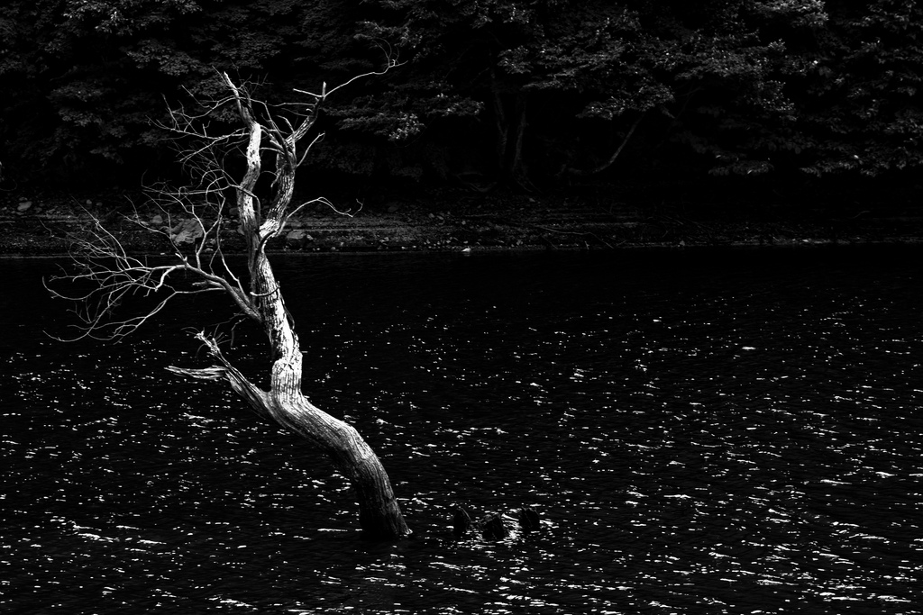 Jusan Pond  (Korea, 2008) © Martijn Savenije